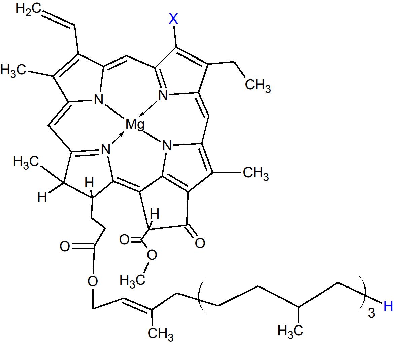 Clorophyll