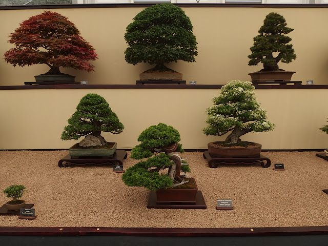 Bonsai trees exhibited by the Federation of British Bonsai Societies at Chelsea Flower Show