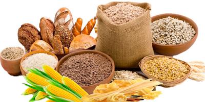 Carbohidratos, que son y como funcionan