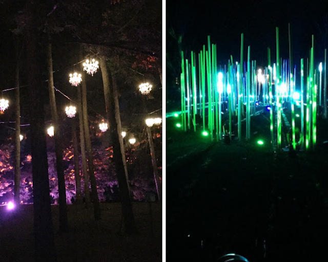 Illumination at the Morton Arboretum highlights nature in new light.