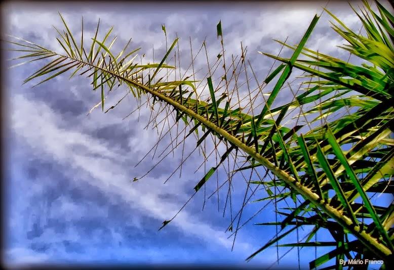 lagarta em palmeiras