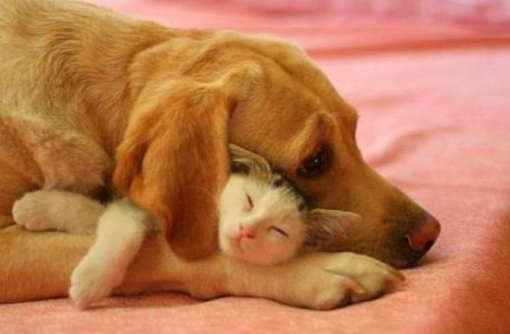 Cats And Dogs Get Along 35 Pics Amazing Creatures