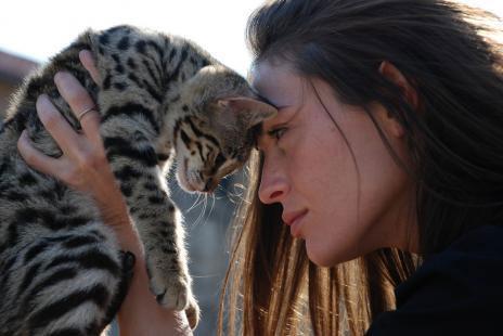 Cách nuôi mèo con giúp tránh những rắc rối khó đỡ