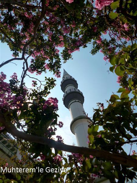oya ağacının çiçekleri