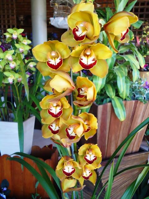 Orquídeas, violetas e outras flores
