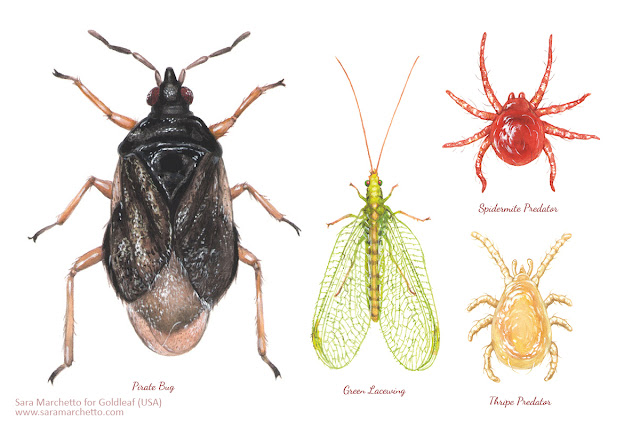 Beneficial insects for organic farming illustration