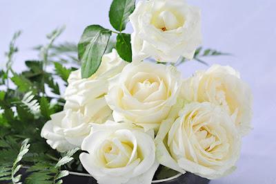 hoa sinh nhat hong trang