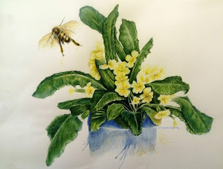 Honey Bee and Primroses, Coloured Pencils. Art Blog about Wildlife and the Garden.