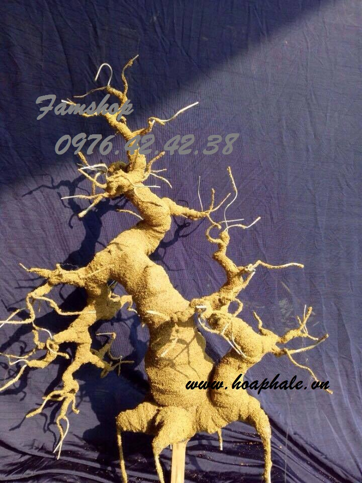Goc bonsai mai dao tai Cua Bac