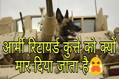 Retired  Army Dog