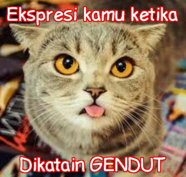 Gambar Meme Kucing Galau
