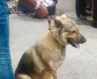Dog Arrested In Lagos For Robbery