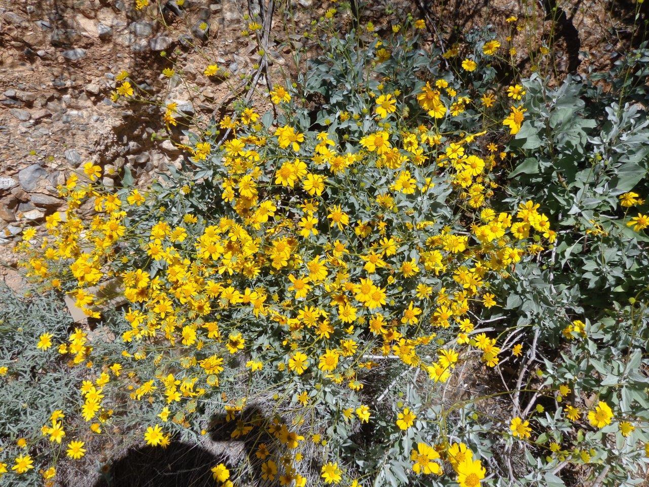 Travels Without Charley Enjoying Steinbecks America 39 Sonoran