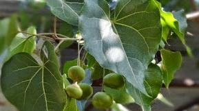 मादक द्रव्यों का इलाज - Madak Drvy Ka Ilaaj