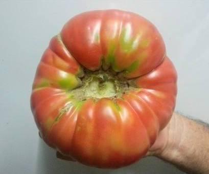Huerto casero de quiquet como plantar tomates en cubos - Cuando plantar tomates ...