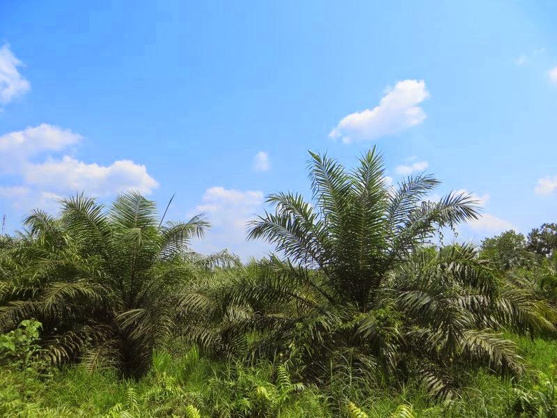 Кусты в Таиланде