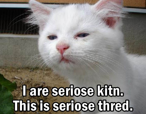 Really Funny Pictures With Words Cats With Words...
