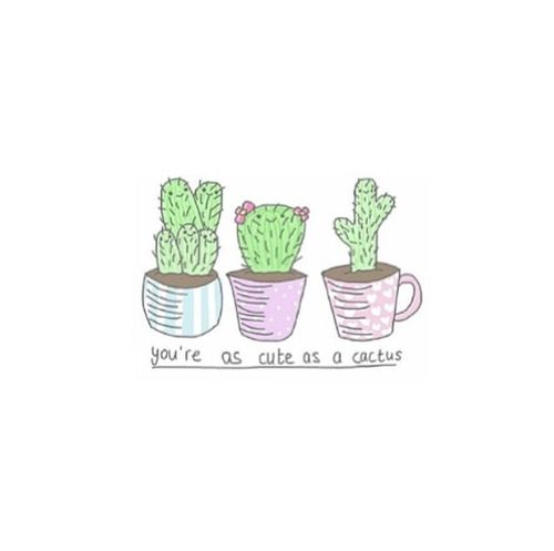 Cactus Quotes | Cactus Island