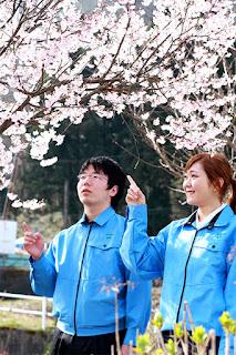 新入社員のお二人と桜