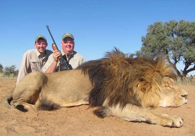 Mau Cium Bau Singa Afrika Selatan Ternyata Begini Serta Foto Pemburu Singa