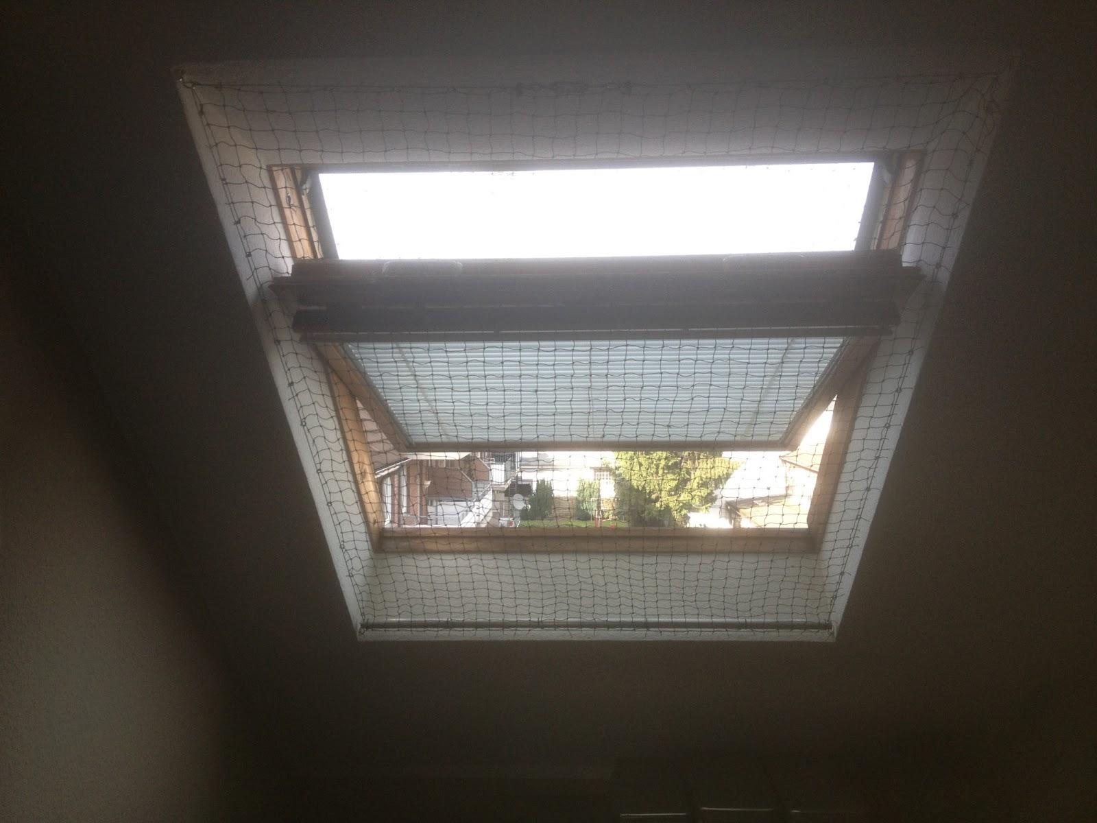 Katzennetz Balkon Anbringen Sichere Katzennetze Fur Balkon