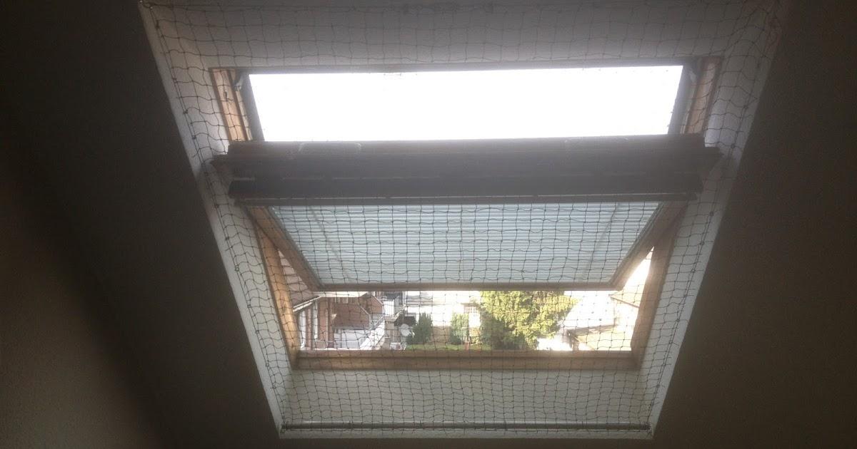 katzennetz nrw die adresse f r ein katzennetz katzennetz. Black Bedroom Furniture Sets. Home Design Ideas
