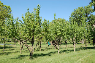 Home Orchard