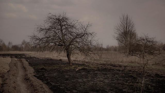 Chernobyl Apple Trees