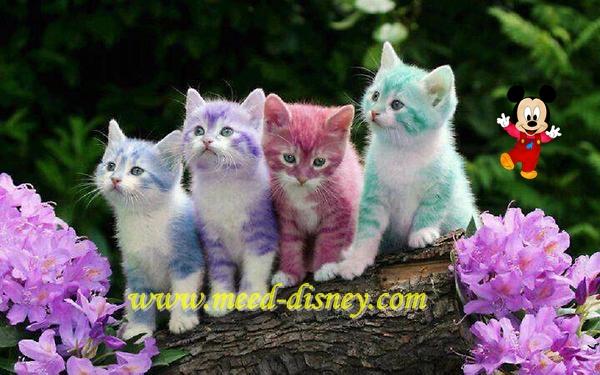 Jual Beli Kucing Di Imadi Pet Johor Bahru Hi Meed Di
