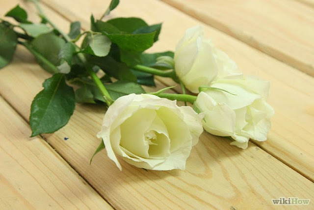 Cách nhuộm hoa hồng 7 sắc