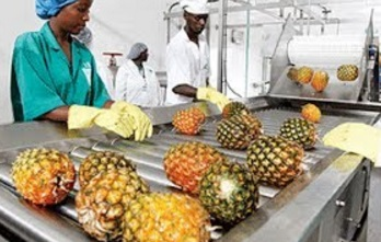 Intelligent Technology Smart Farming: Papaya, Passion fruit, Pineapple, Lemon juice extraction