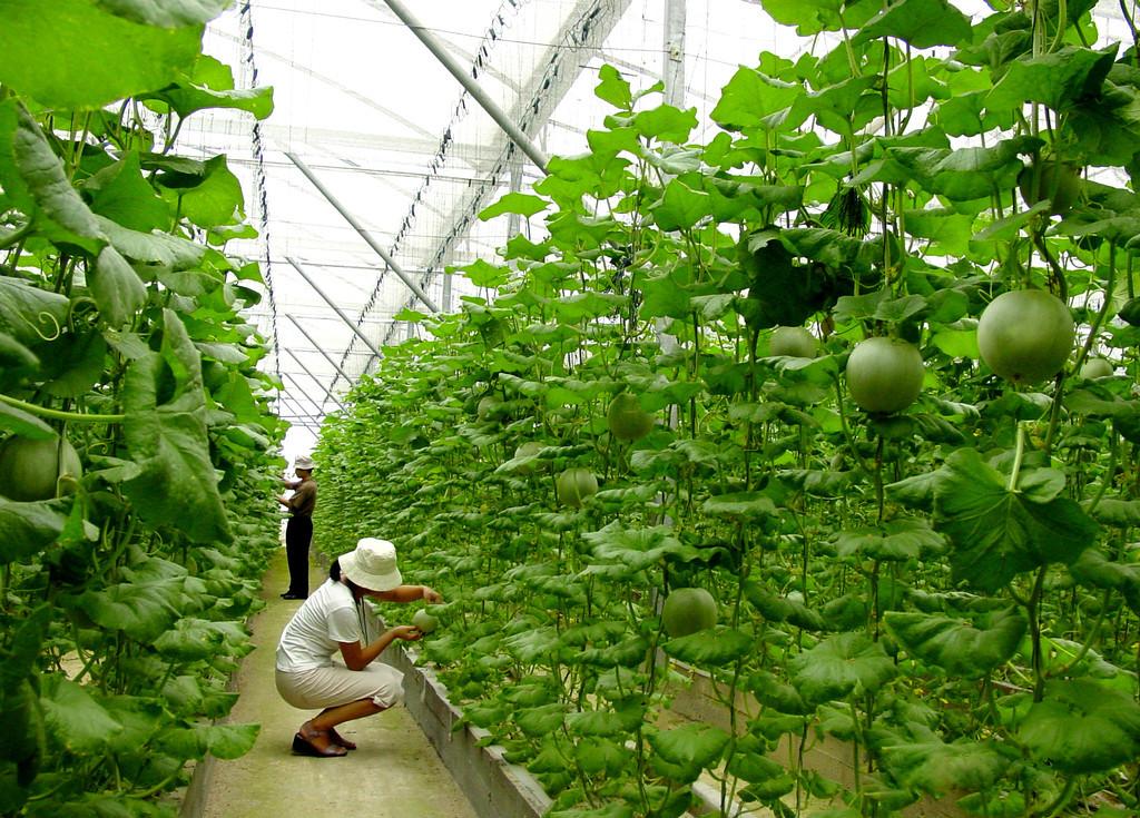 Sejarah Pertanian Berkelanjutan Gurugeografiid