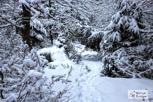 Rudawiec zimą