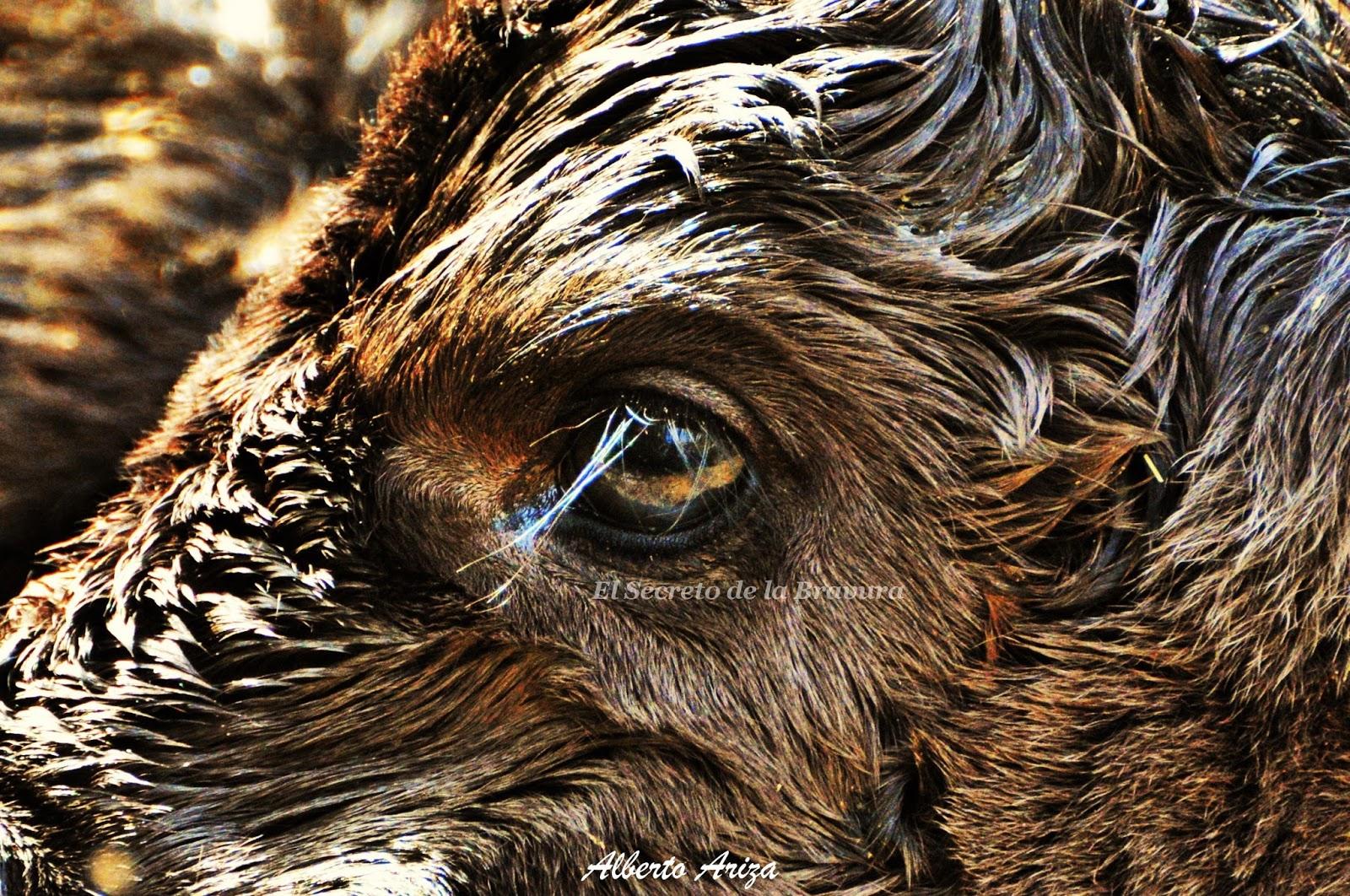 El hinchazón bajo los ojos después de la crisis de la nariz