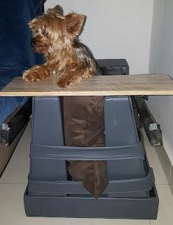 cadeira para cães com megaesôfago
