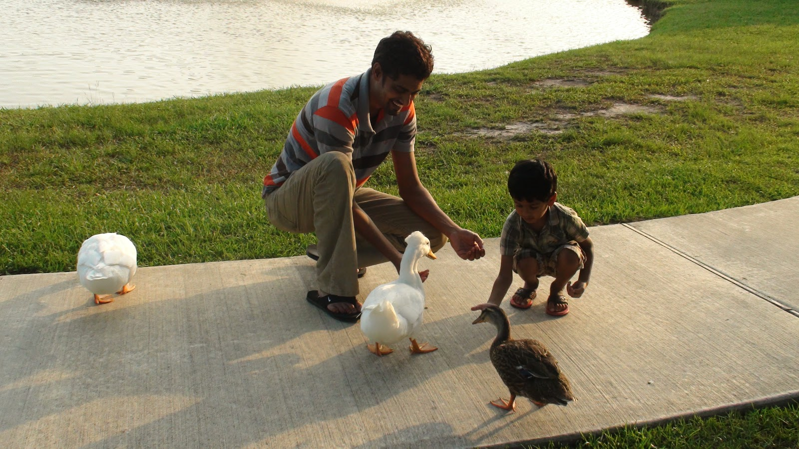 Life Experiences Feeding Ducks At Fairwiew Mandeville La