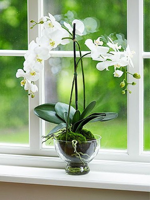 Decorate Your Interior With Orchids 3