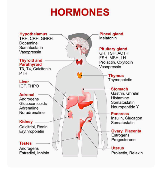 Endocrine Glands And Their Hormone Biologylovers