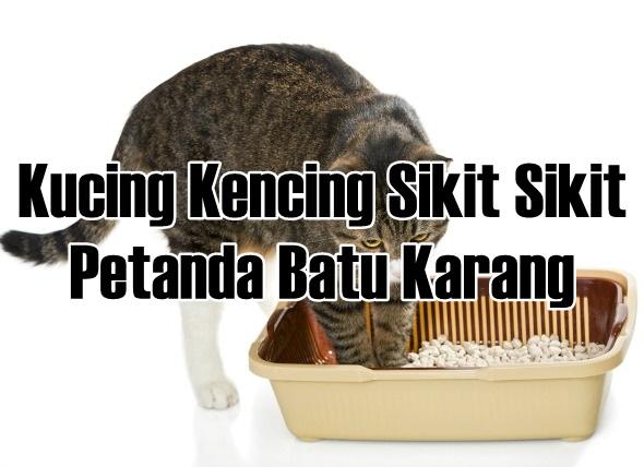 Kucing Kencing Sikit Sikit Petanda Batu Karang