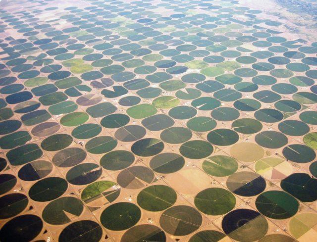 ARÁBIA SAUDITA MOSTRA QUE NÃO EXISTE LIMITES PARA AGRICULTURA