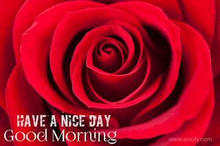 New Good Morning shayari & status in hindi for facebook and whatsapp