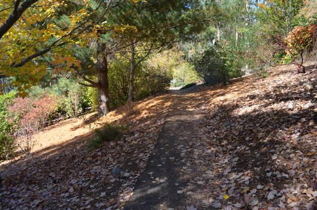a thin, straight level path leading into the distance with steep slopes on either side. The land slopes from the top right to bottom left of the photograph.The ground is carpeted by brown fallen leaves.