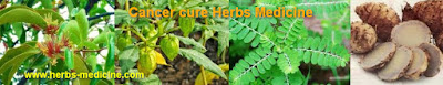 Cancer cure make herbal