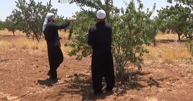 أهالي الحقف بالسويداء يطالبون بمعالجة مشكلة نقص المياه الناجمة عن تعطل البئر الوحيدة في القرية!