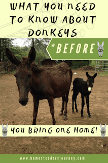 Donkey care, what you need to know before you bring a donkey home!