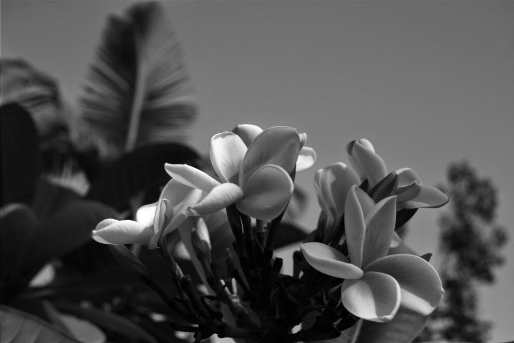 fotografía de plantas y flores en blanco y negro, imágenes, fotos creativas, artística,