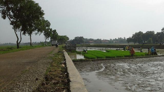 Jalan desa muara blanakan subang