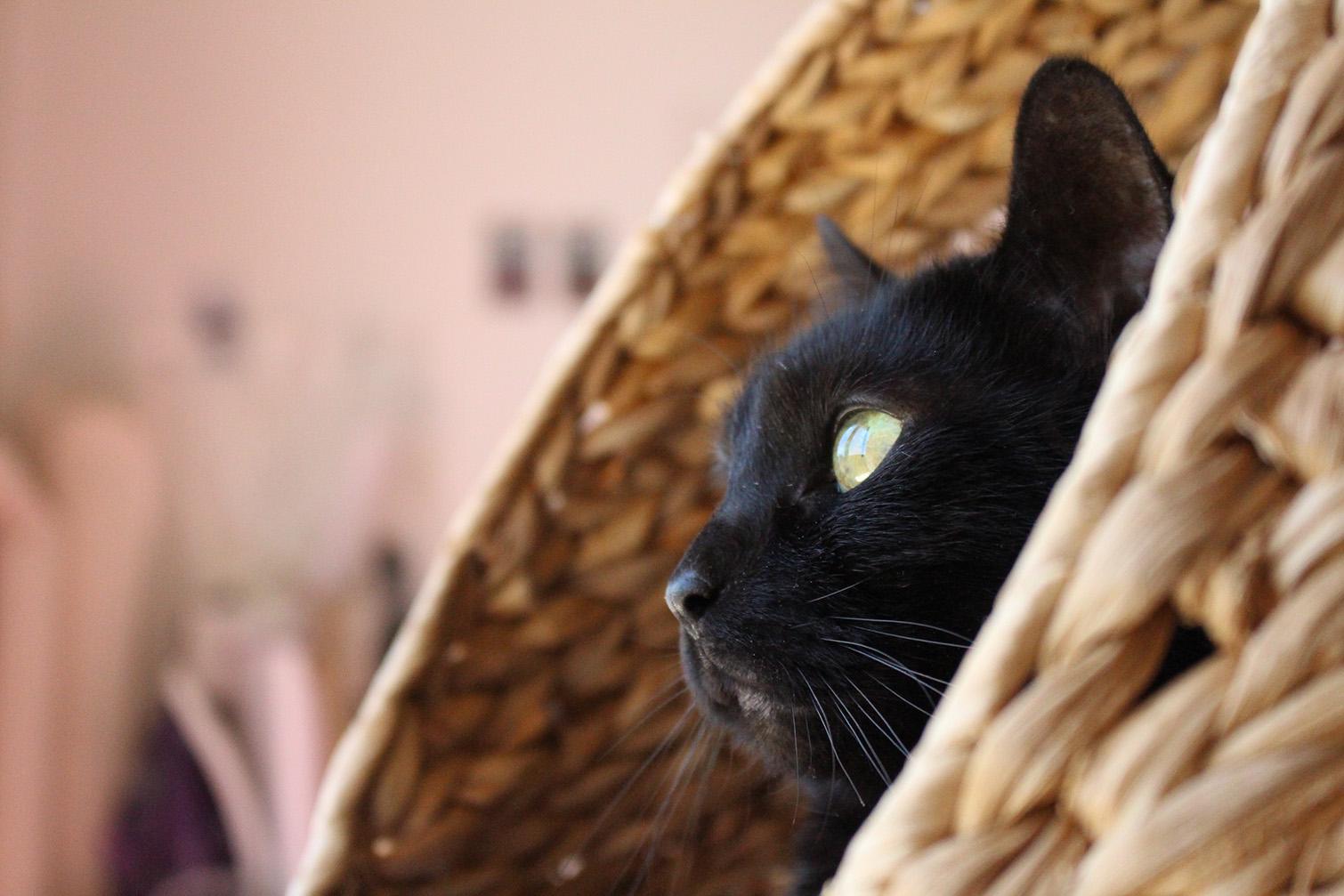 Mon chat perdu et puis retrouvé, le soulagement