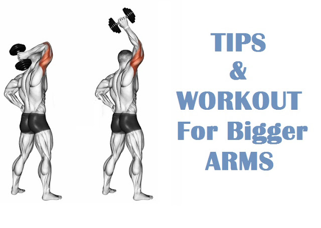 Build Bigger Arms Fast