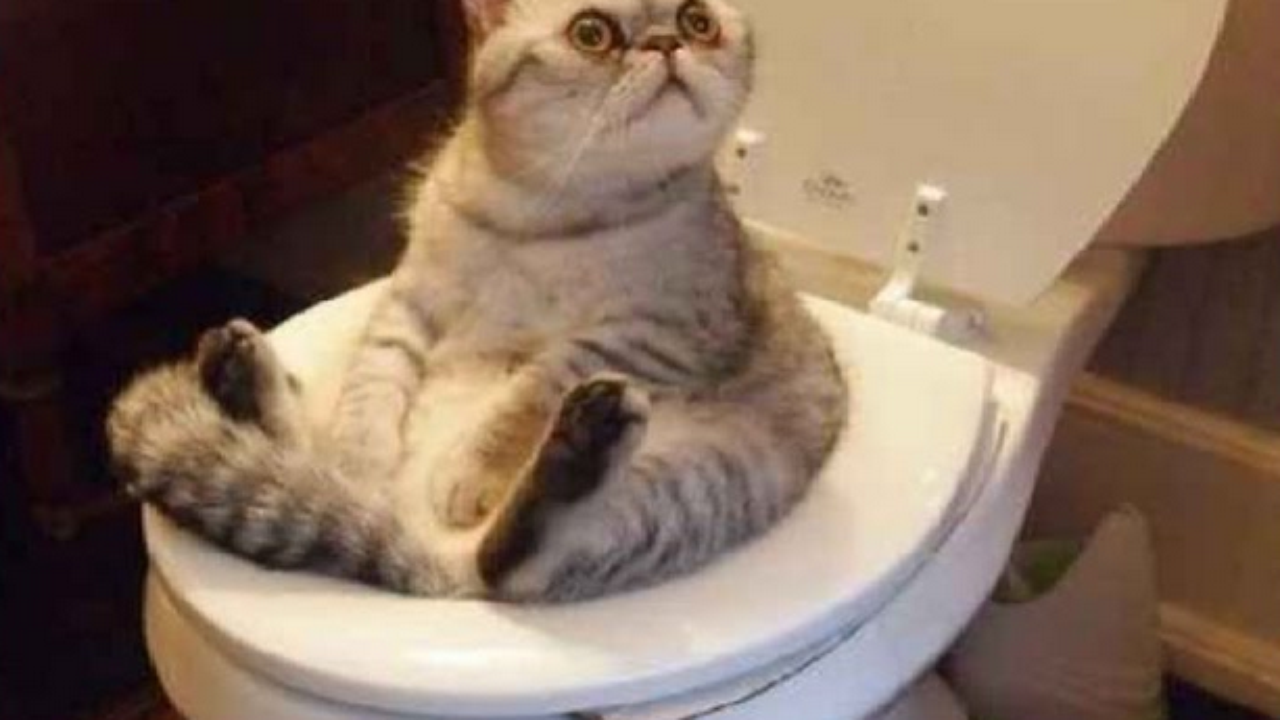 Funniest Cat Pictures On The Internet
